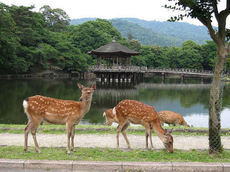 Parco di Nara
