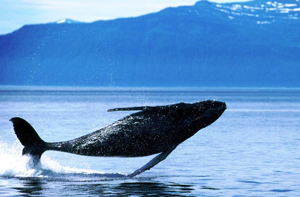 kaikoura whale1