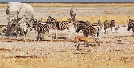Gran Tour della Namibia Glamping