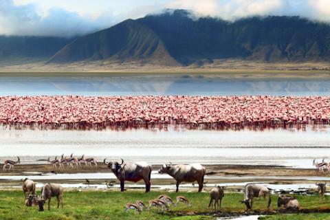 Parco Nazionale  Lago Manyara