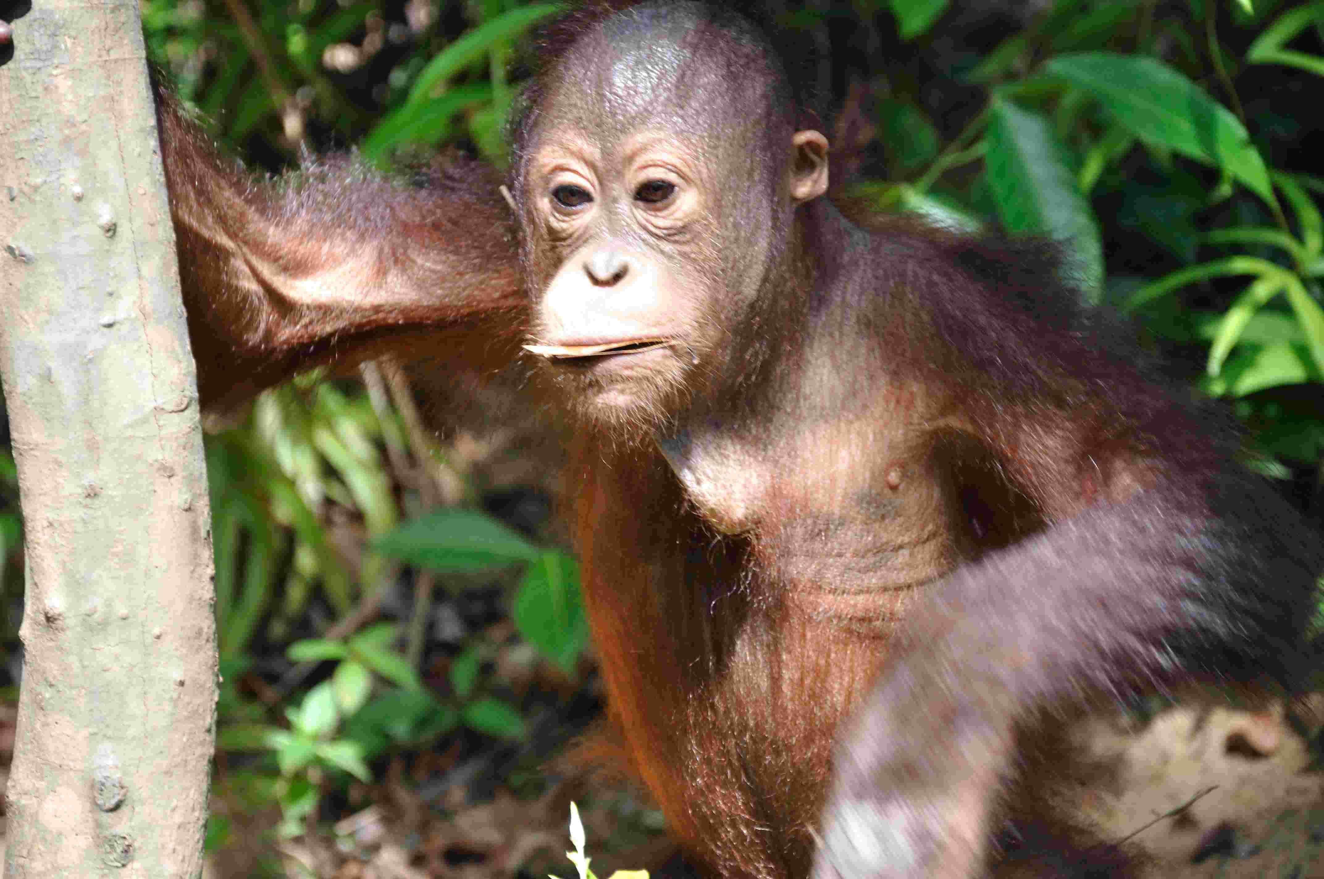 Riserva Naturale di Kinabatangan