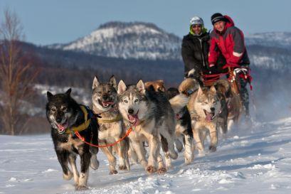 Attività in slitta trainata da cani