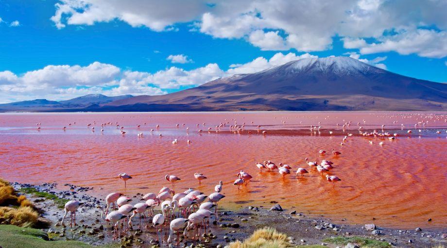 Bolivija - Page 2 Laguna%20colorada%20bolivia